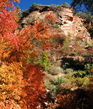 Fall Colors Special at El Portal Sedonda Hotel