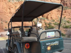 Pet Friendly Sedona Hotel Offers pet Friendly Jeep Tours of Sedona