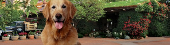 Pet Friendly Sedona Hotel - Now with Rooftop Garden