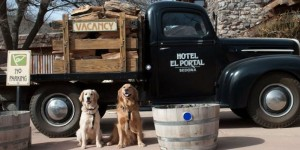 Pet Friendly Sedona Hotel