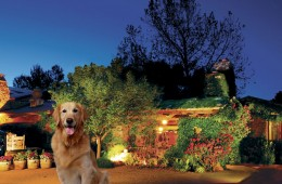 gallery-pet-friendly-night-new