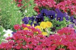 gallery-flowers