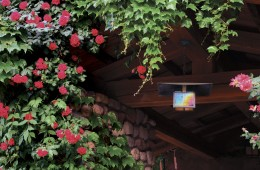 gallery-flowers-lantern