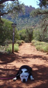 Pet Friendly Sedona & El Portal Sedona Hotel