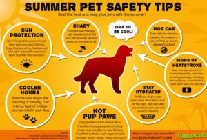 El Portal Sedona Hotel - Pet Summer Safety