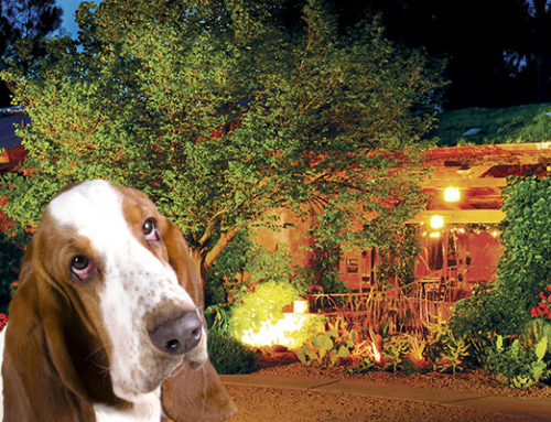 Fireworks – Tips for Keeping Your Furry Friend Calm & Safe