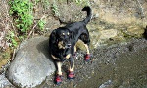 Pet Hiking Safety Tips - El Portal Sedona Hotel