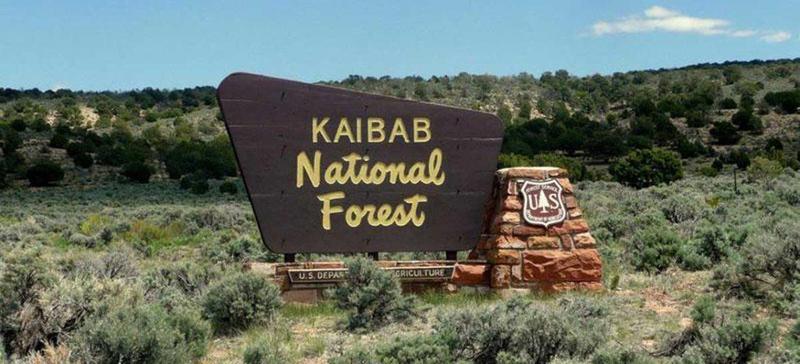 Kaibab National Forest Arizona - El Portal Sedona Hotel